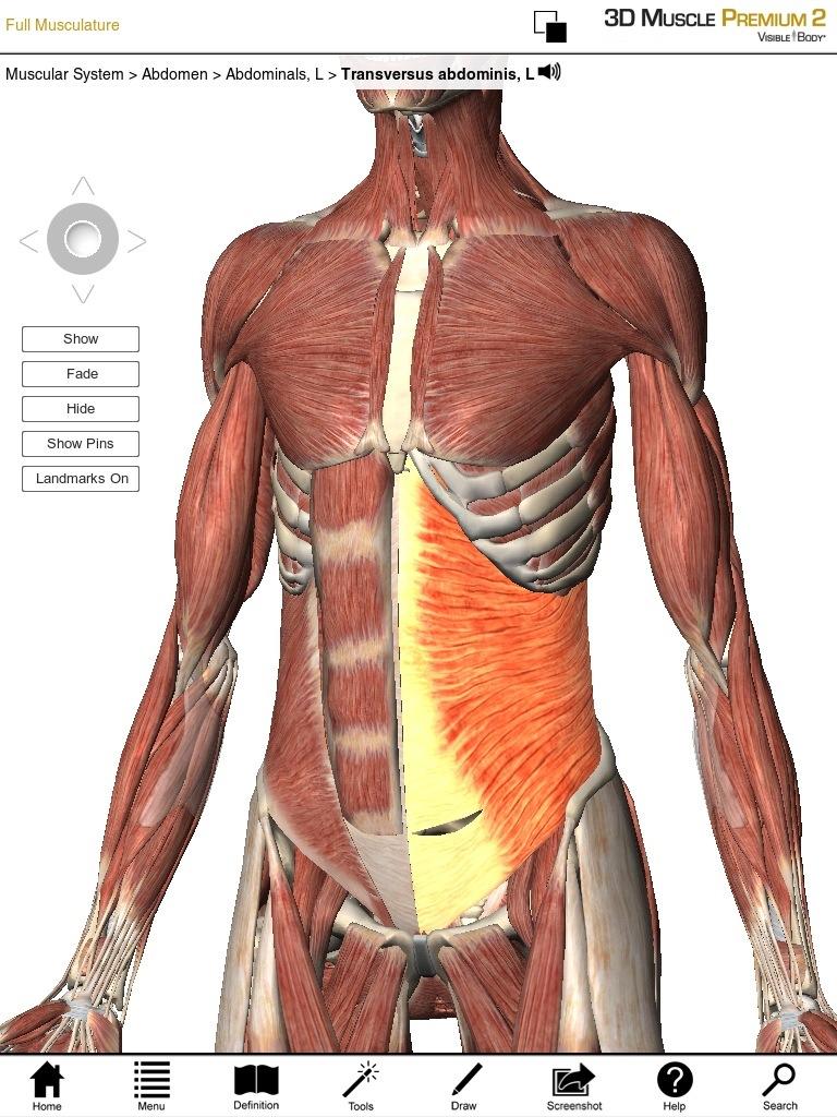 Balls vs Barbells for High Threshold Core activation | Posture ...