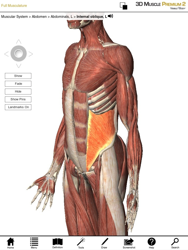 Core Muscles: Lateral Core Muscles