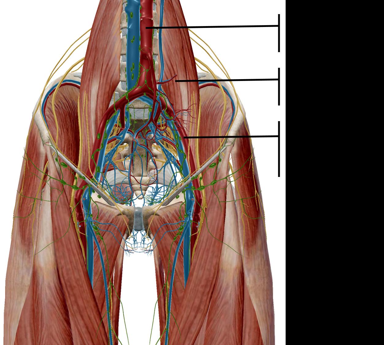 The Danger Of The Drops A Review Of Peach Et Al 2011 Posture