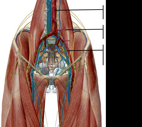 external iliac artery